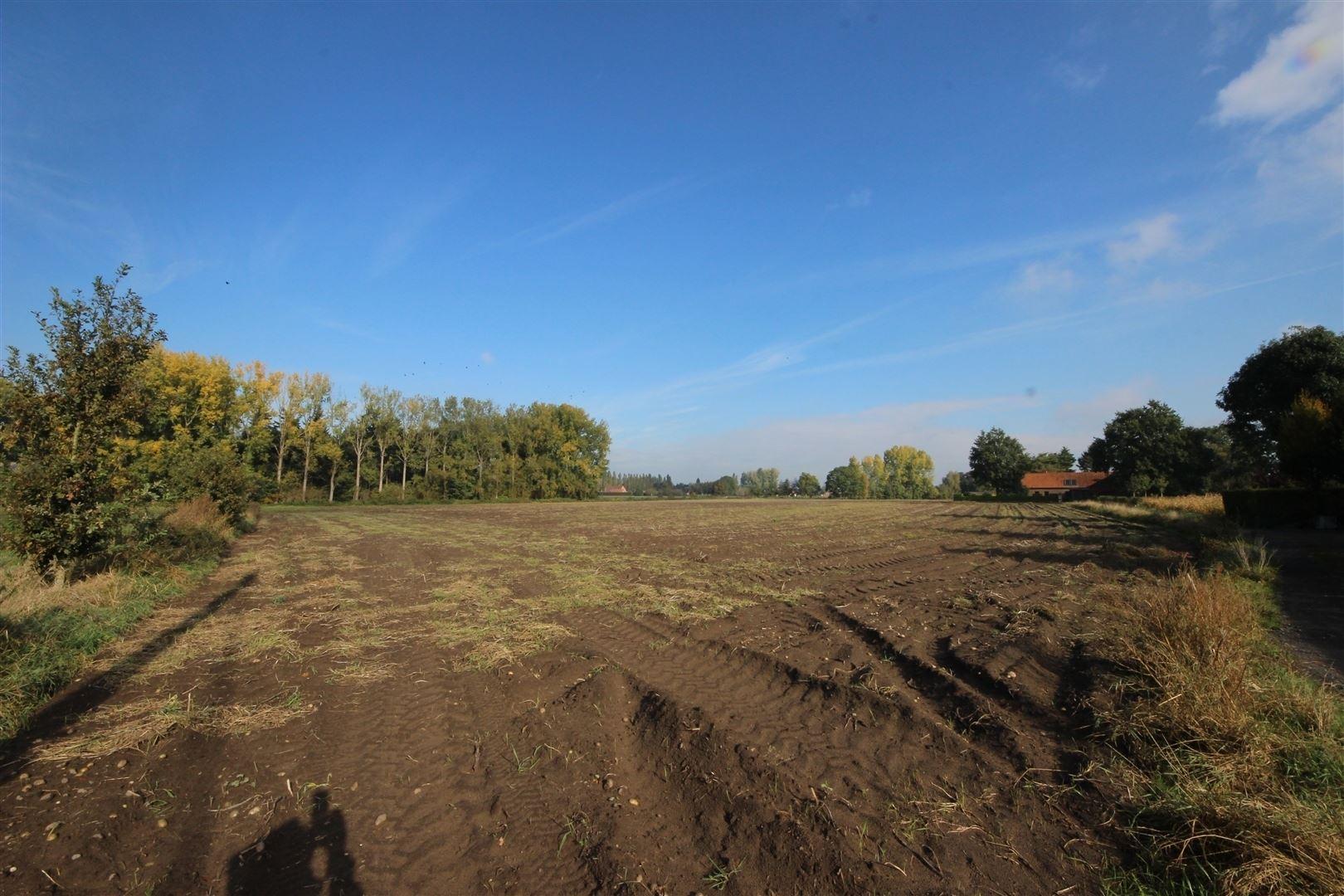Landbouwgrond 9 66 hectare te kruishoutem woningen en for Landbouwgrond te koop oost vlaanderen